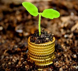 Eine keine Pflanze wächst auf einem Stapel aus Geldmünzen.