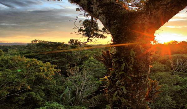 Chance für Stopp der Erdölförderung im Yasuní-Regenwald